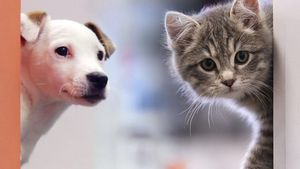 La nueva ley de protección animal, en 10 claves
