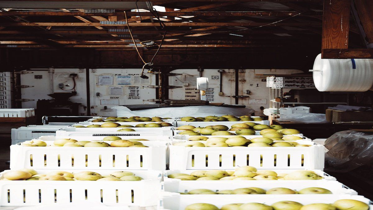Impuls a la producció ecològica