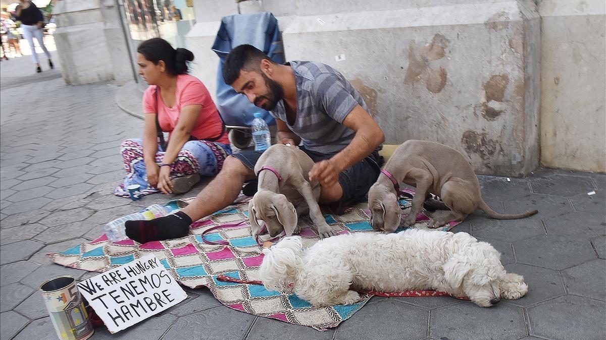 Dos de los individuos que utilizan a perros como reclamo lucrativo, con dos cachorros braco de weimar y un bichón maltés en paseo de Gracia con Gran Via de les Corts Catalanes.