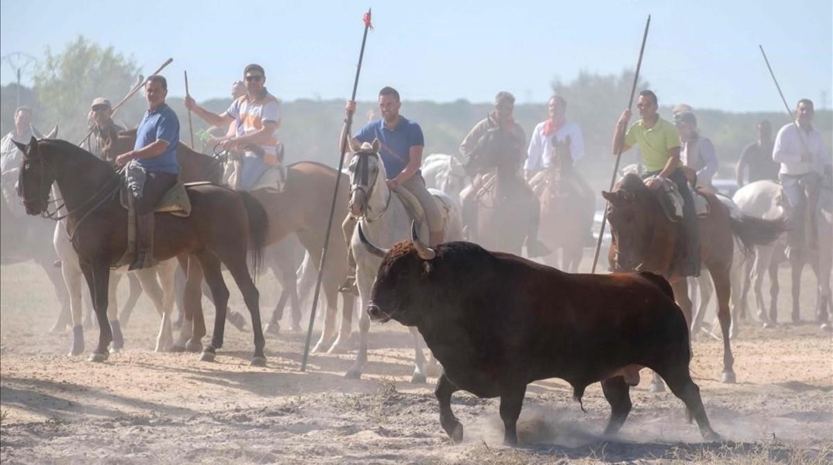 Lanceros en el Toro de la Vega.