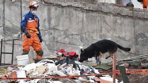 Un rescatista japonés con un perro participa en la búsqueda de supervivientes en un edificio desmoronado en Ciudad de México, el 22 de septiembre.