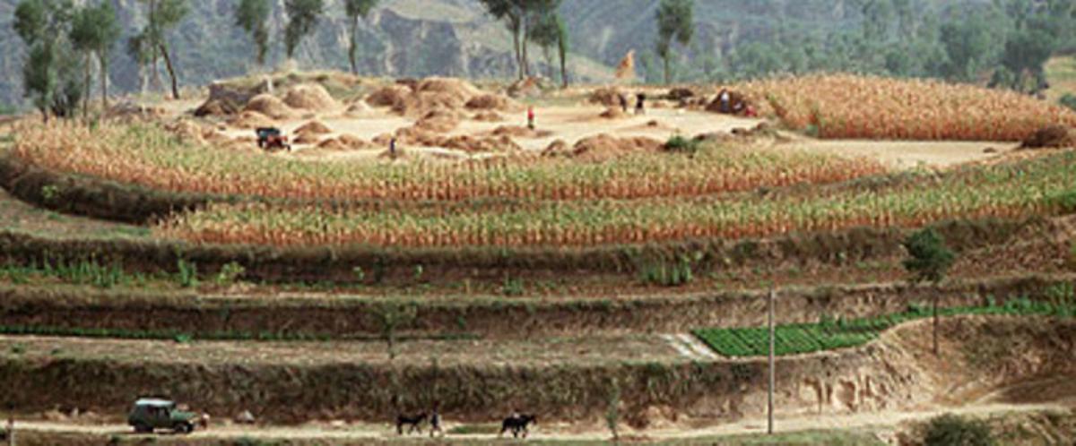 Campos de cultivo de cereales en China.