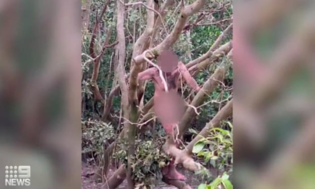 Un fugitiu, trobat nu en una zona infestada de cocodrils a Austràlia