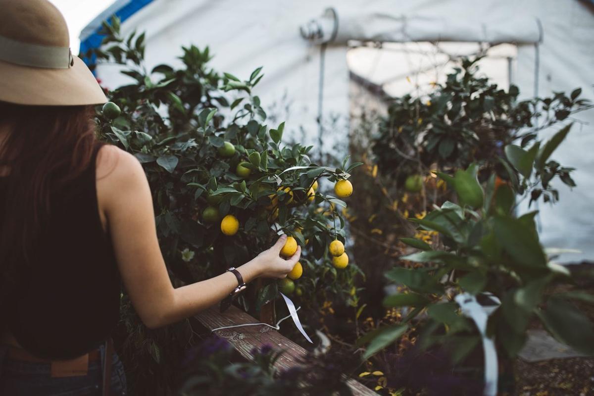 Según cifras de la OIT, en los próximos años se crearán 24 millones de empleos verdes.