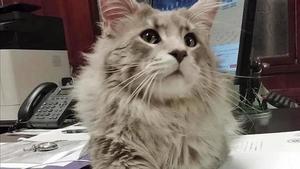 Un jutge ordena la custòdia compartida del gat d'una parella que es va separar