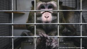 Madrid suspèn l'activitat d'un laboratori després de trobar indicis de maltractament animal