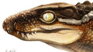 Un fòssil robat permet descriure una nova espècie de cocodril al Pirineu