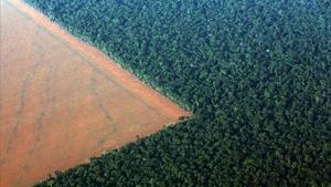 Vista de la selva amazónica deforestada convertida en un campo preparado para la siembra de la soja, en el estado de Mato Grosso, Brasil.