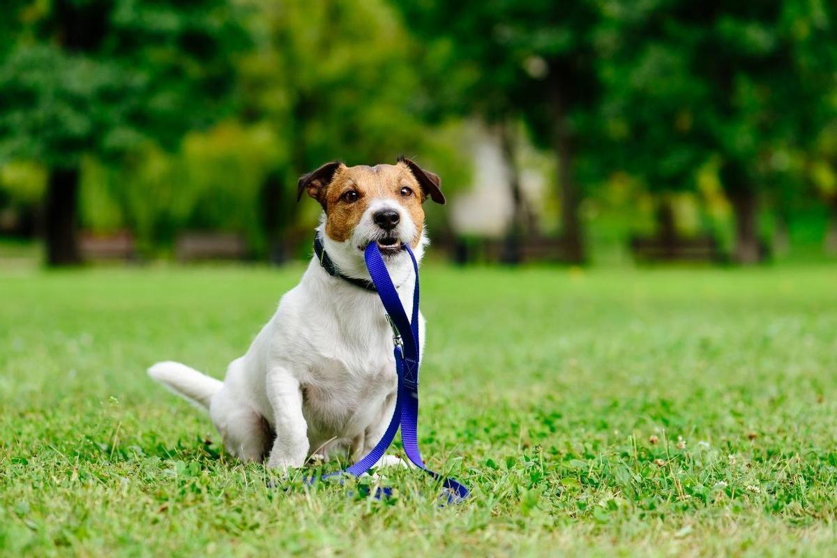 Rubí obre a consulta prèvia el reglament del servei de recollida i manteniment d'animals de companyia