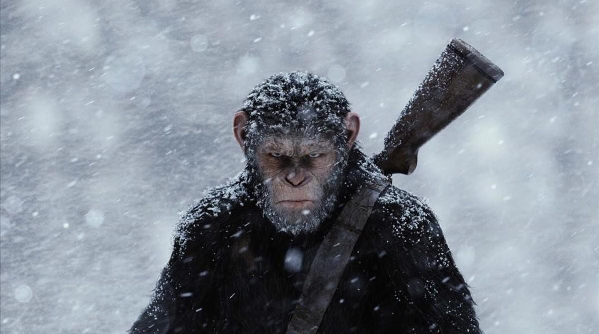 Monos con más de 7 vidas