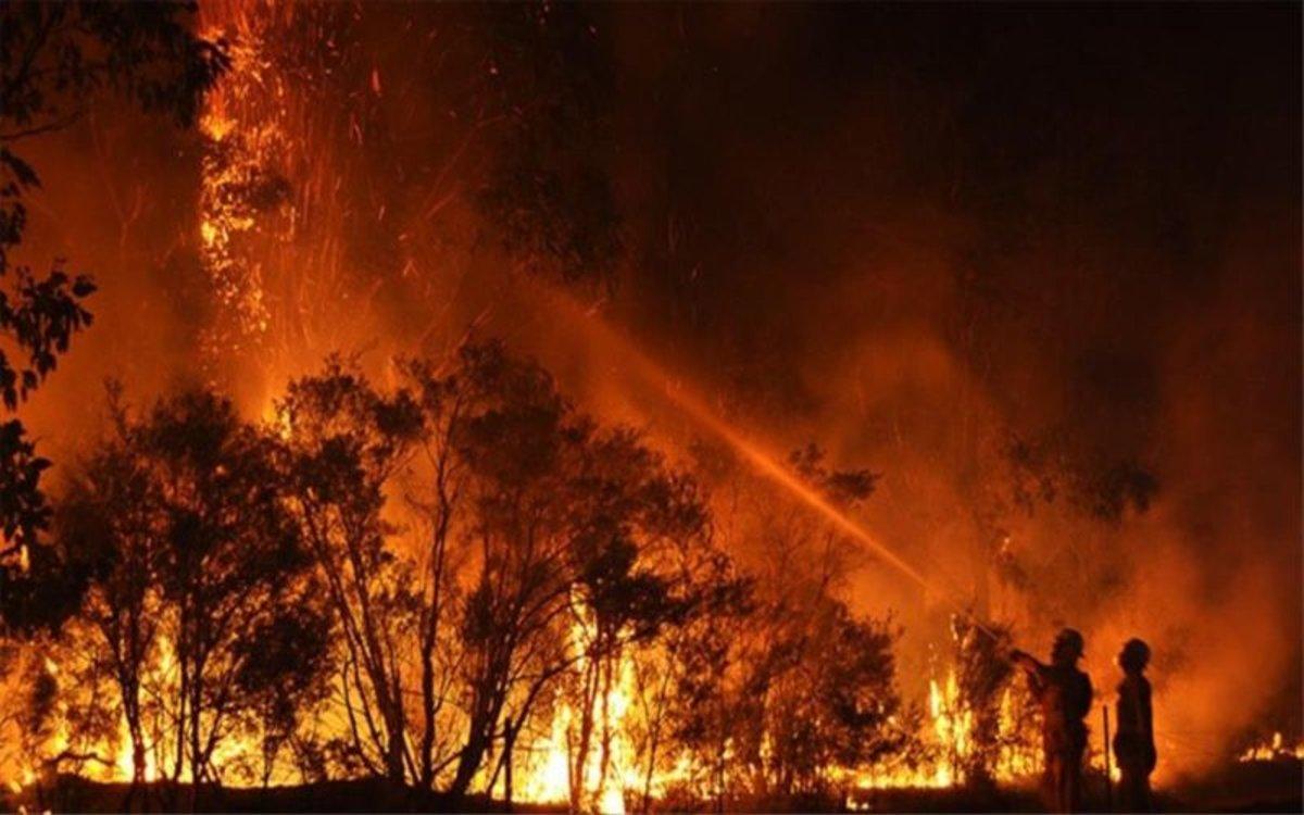 Prop de 500 milions d'animals han mort en els incendis d'Austràlia