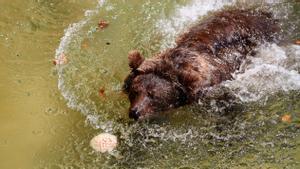 El Zoo dona gelat als seus animals per combatre la calor
