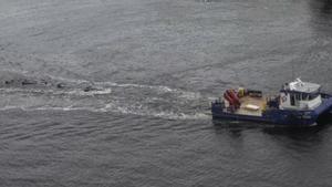 Austràlia porta mar endins els 380 cadàvers de balenes encallades a Tasmània