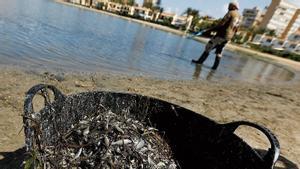 Peces muertos en el Mar Menor