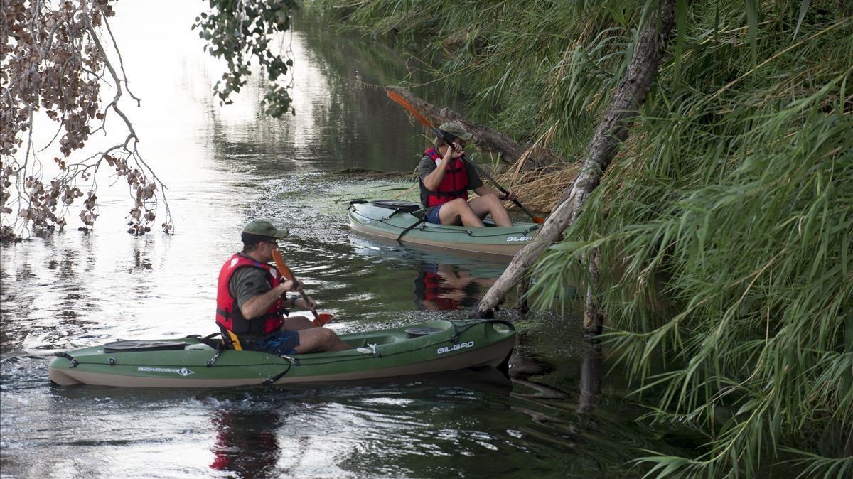 Agentes rurales inspeccionan el tramo del Ebro entre Benifallet y Xerta en busca de ejemplares del caracol.