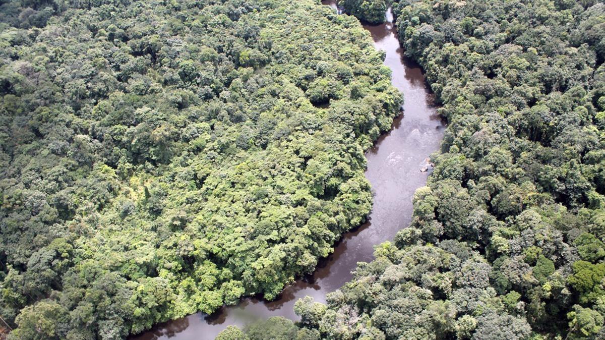 Vista aérea de un paraje de la selva amazónica.