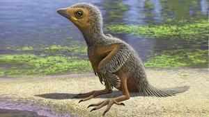Reconstrucción artística de un pollo de un ave a partir de un fósil descubierto en el yacimiento de Las Hoyas, en Cuenca.