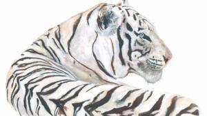 Dibujo de un tigreo coreano (Panthera Tigris), por Joana Santamans, publicado en Animales Invisibles (Nórdica, 2021) de Gabi Martínez y Jordi Serrallonga.