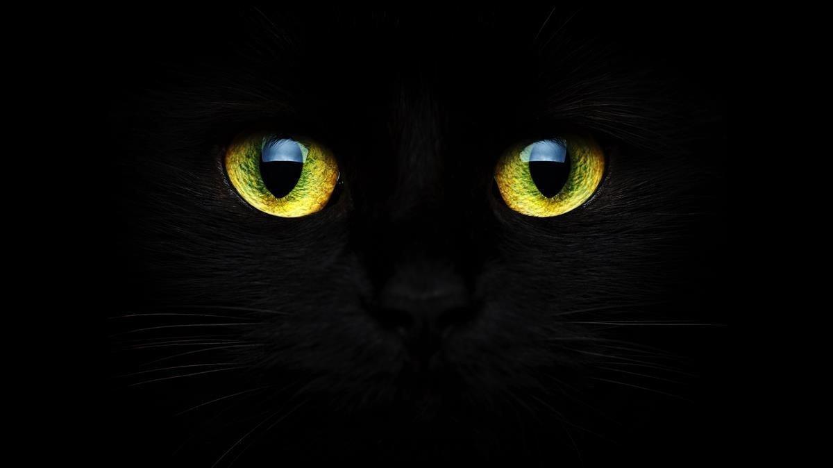 Paralitzades les adopcions de gats negres per Halloween