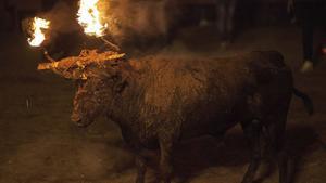 El Toro Jubilo, durante el festejo, el domingo, en Medinaceli (Soria).