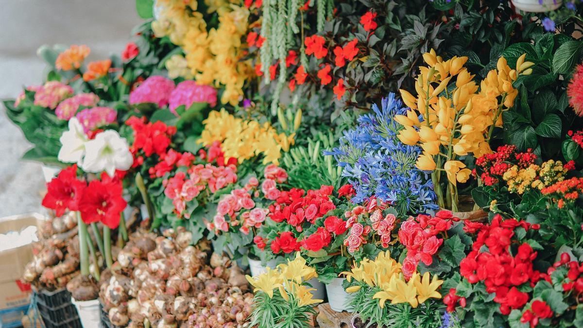 Flores vistosas en un comercio, expuestas para su venta.