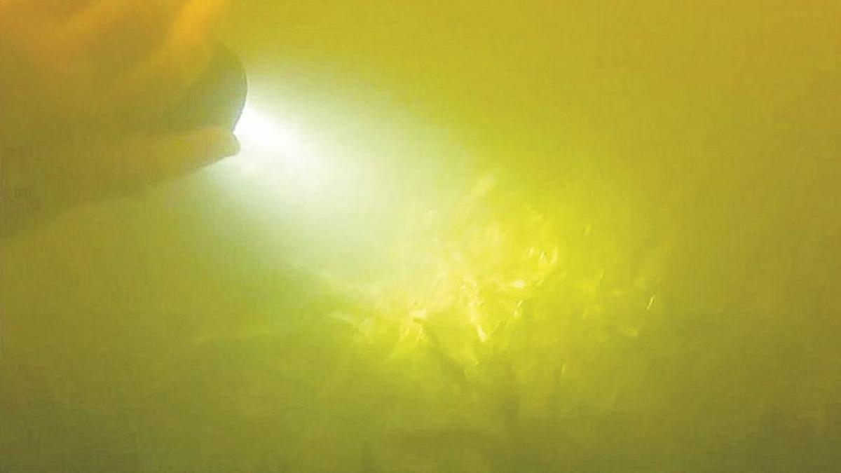 Imagen de las praderas marinas de la semana pasada.