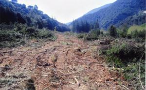 Urge frenar la tala en la Amazonía y frenar los incendios que el año pasado arrasaron con más de 9 mil kilómetros cuadrados.