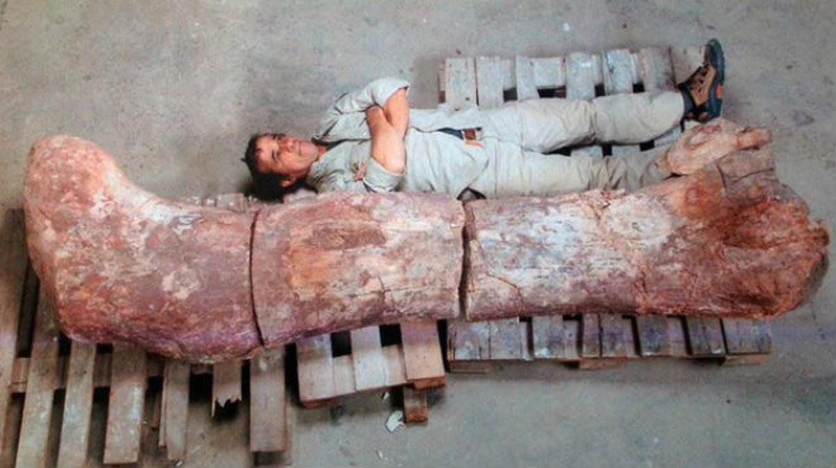 Exponen el fémur de dinosaurio más grande hallado hasta la fecha