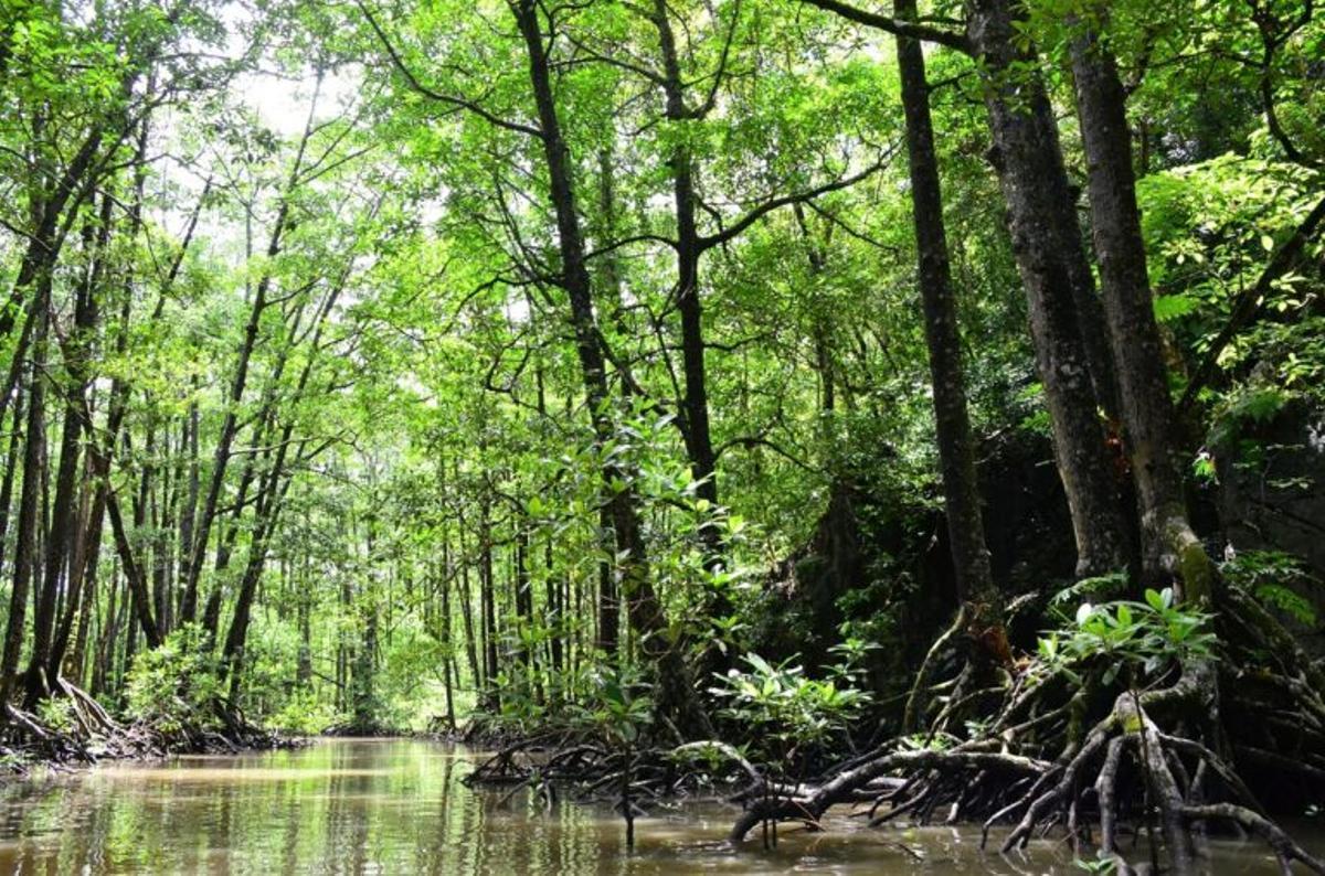 ¿Sabías que los manglares capturan 1.000 toneladas de CO2 por hectárea?