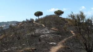 Los bomberos siguen remojando la zona incendiada en Collserola para su total extinción.