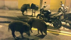 Confinament humà i llibertat animal