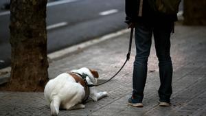 Un joven sujeta la correa de su perro mientras este está tendido en el suelo de una calle de Barcelona, el día de Sant Jordi del año pasado, durante el periodo de confinamiento.
