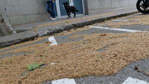Restos de los plataneros depositados sobre las calles de Barcelona.