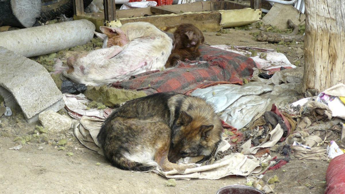 Muchos perros son abandonados sin comida ni bebida, en condiciones deplorables.