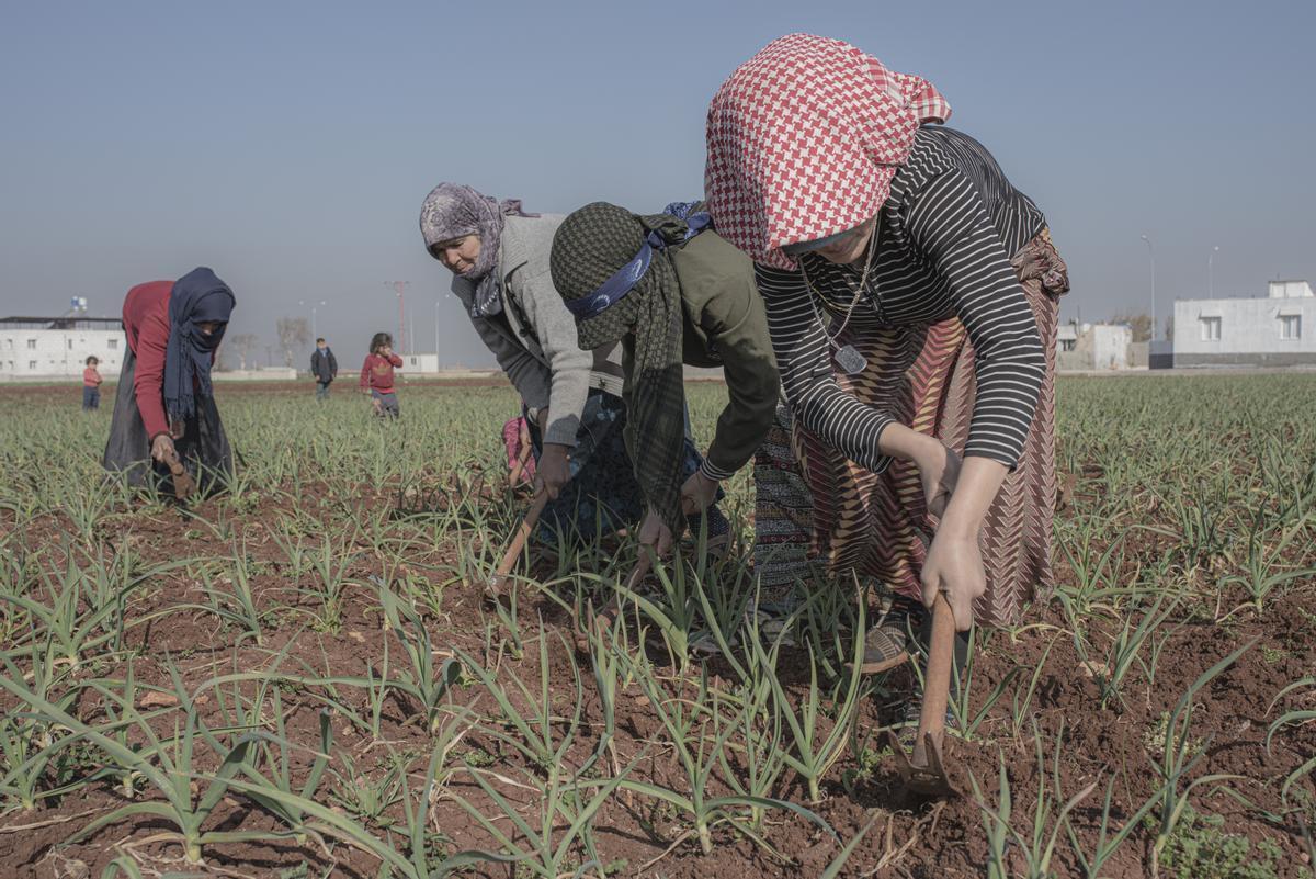 Refugiadas sirias trabajan en el campo de Reyhanli.