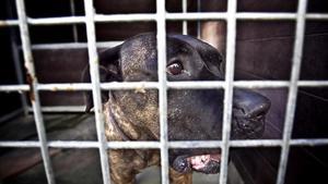 Sentència pionera per maltractament contra els amos d'una botiga de gossos