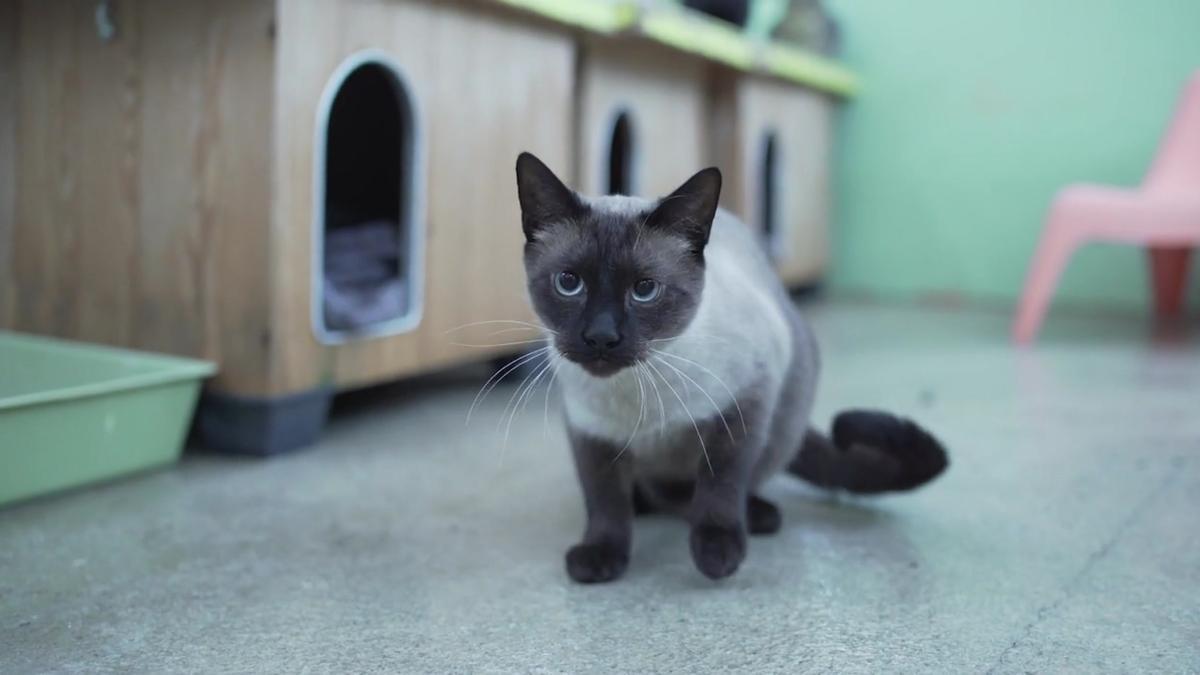 Barcelona promueve la adopción de gatos para combatir la soledad de las personas mayores.
