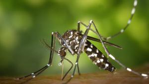 Virus del Nil: què és, com es contrau i símptomes