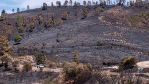 Monte quemado por el incendio de Almonaster, en Huelva.