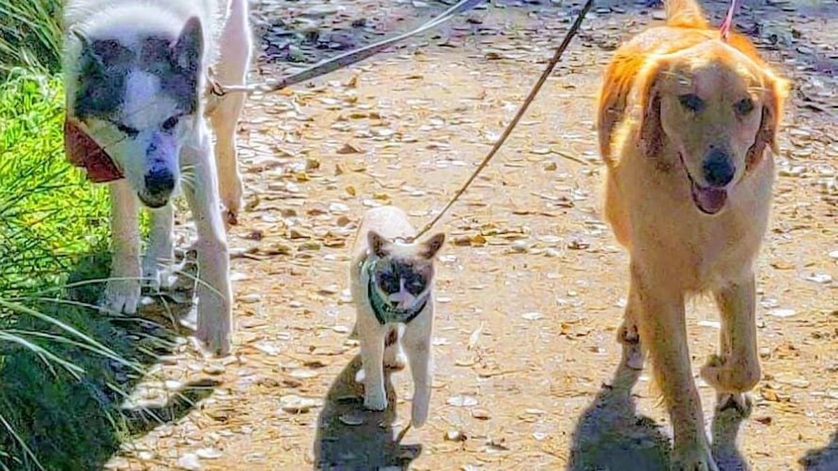 barcelona 20/07/2021 perros en instagram