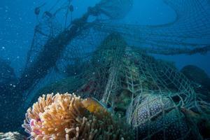 Cerca del 6 % de las redes utilizadas por pescadores quedan abandonadas.