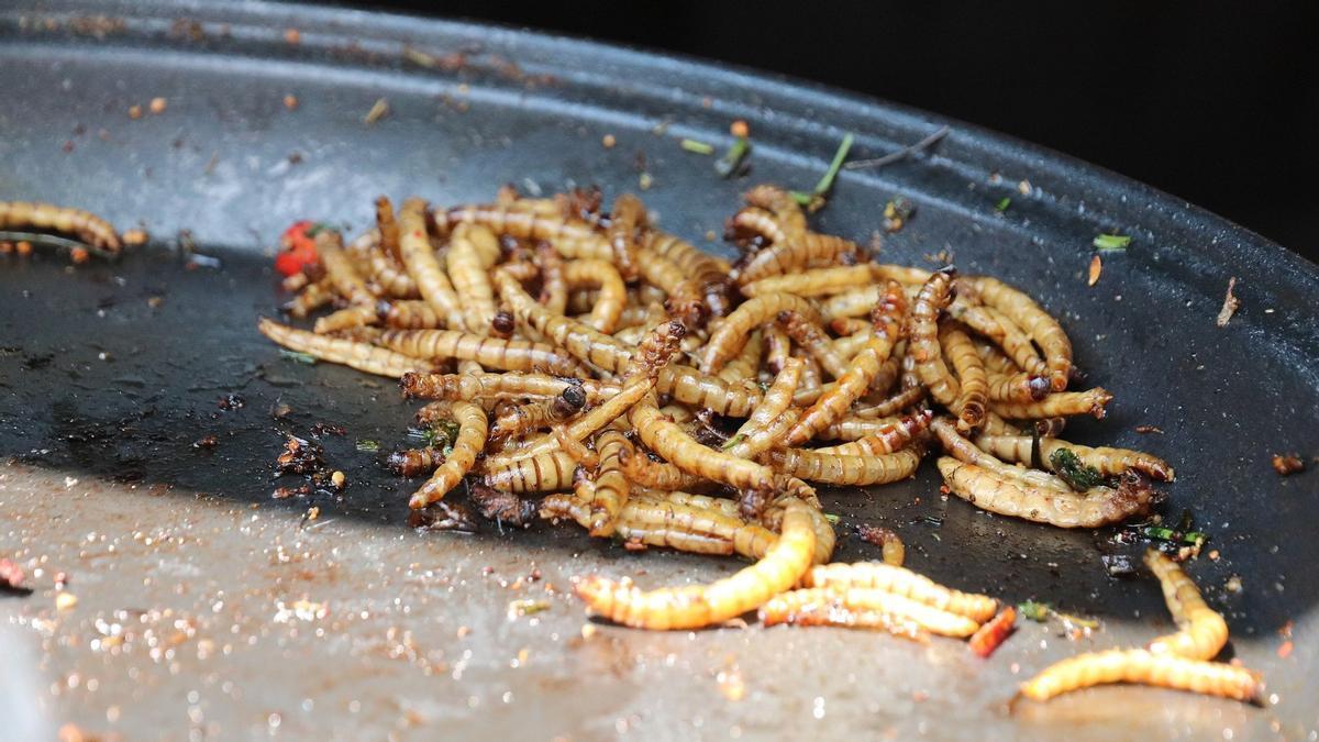 El gusano amarillo seco o gusano de la harina.