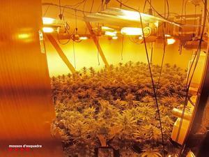 Sis detinguts i quatre cultius 'indoor' de marihuana desmantellats al barri de Sant Roc de Badalona