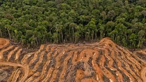 Imagen de la deforestación en Indonesia.