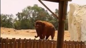 Un elefante del zoo de Rabat ha matado a una niña de una pedrada.