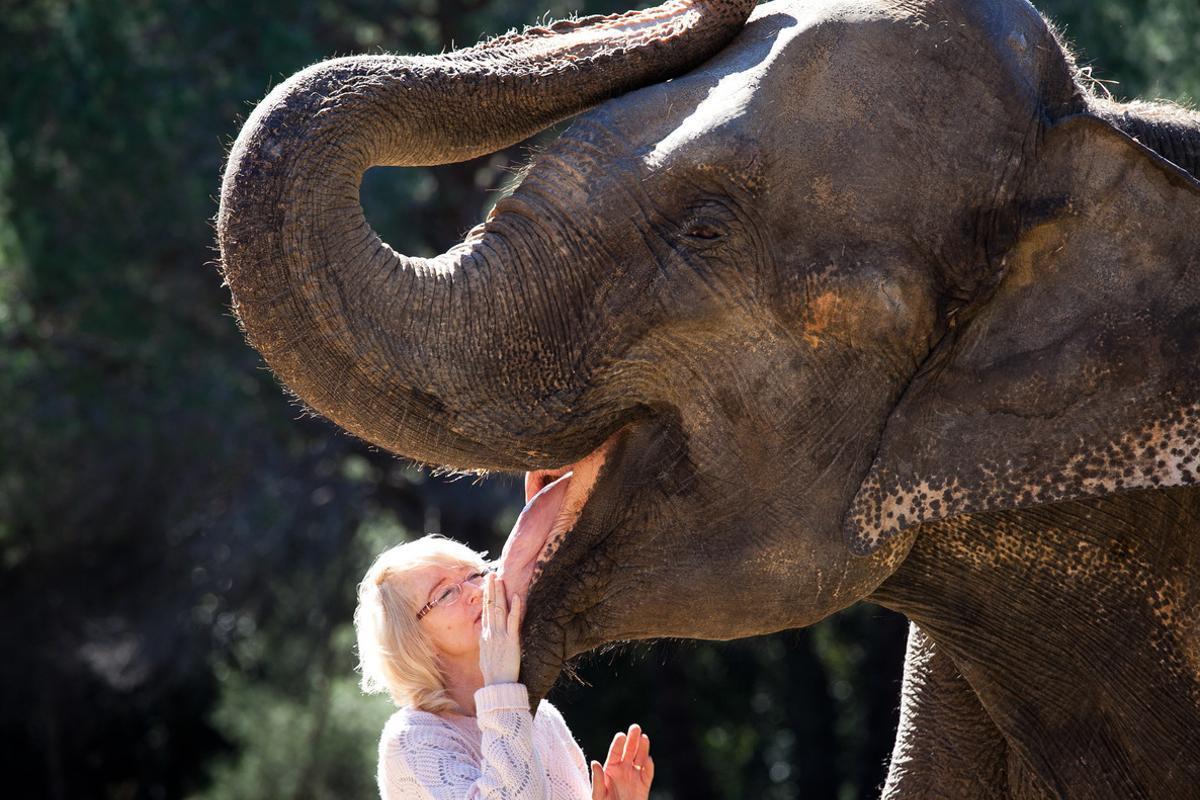 Los elefantes nunca olvidan cuando han sido maltratados ni las rutas que les llevan a muy diversas fuentes de alimento.