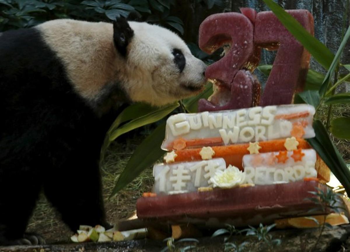 Hielo y zumo de frutas, el pastel de celebración de su 37º cumpleaños de la panda Jia Jia.
