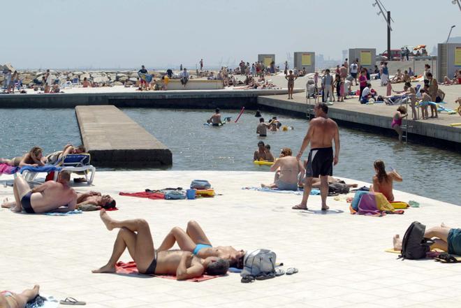 La playa del Fòrum de Barcelona tiene más de 500 especies marinas