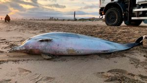 Troben dos dofins morts a la platja de Gavà
