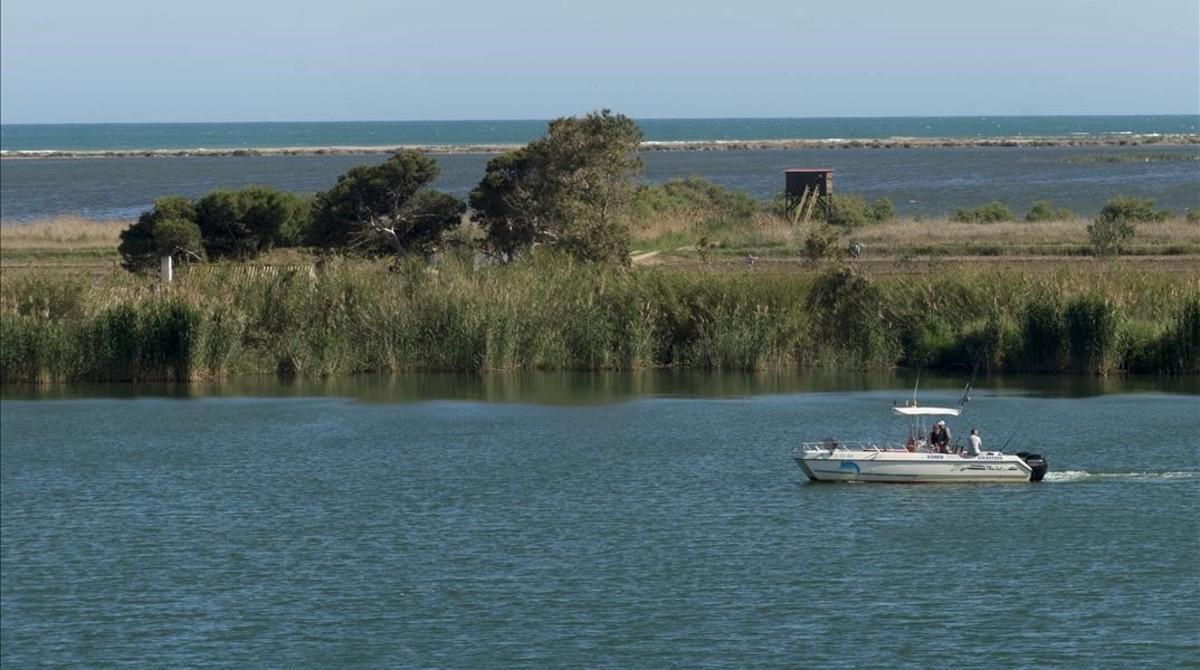 Tramo final del río Ebro,con la Illa de Buda al fondo, uno de los ecosistemas más frágiles del delta.